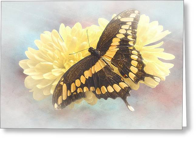Arthropoda Greeting Cards - Grunge Giant Swallowtail Greeting Card by Rudy Umans
