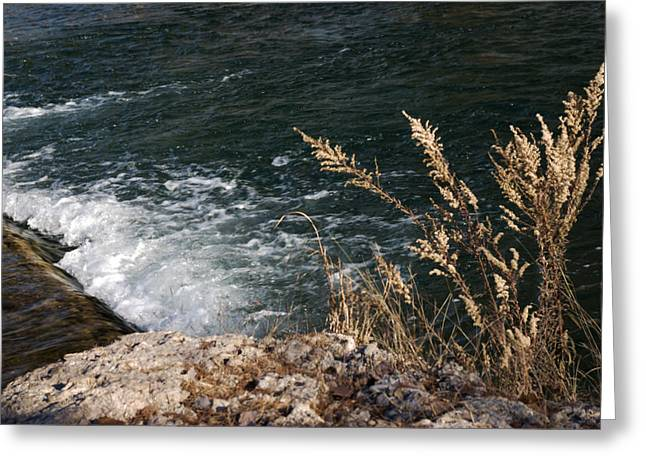 Clean Water Greeting Cards - Guadalupe Overflows Greeting Card by Karen Musick