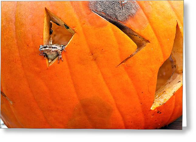 Tree Frog Greeting Cards - Halloween surprise Greeting Card by Jean Noren