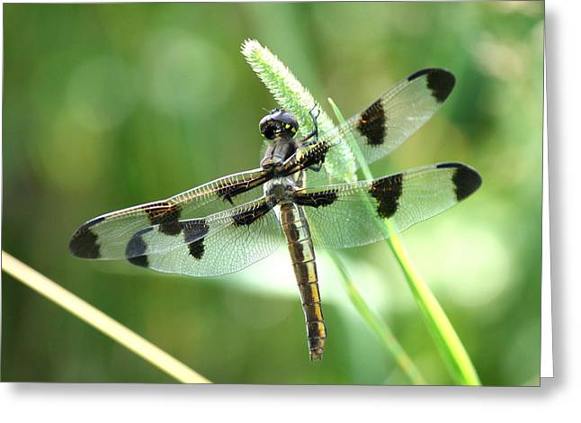 Macro Photography Greeting Cards - Hanging On  Greeting Card by Neal  Eslinger
