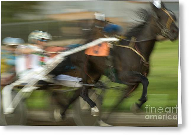 Race Horse Greeting Cards - Harness Racing 8 Greeting Card by Bob Christopher