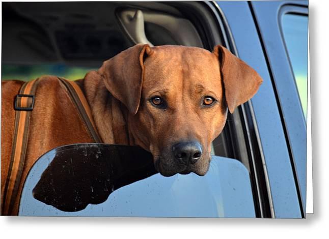 Dog In Window Greeting Cards - Head On Greeting Card by Fraida Gutovich