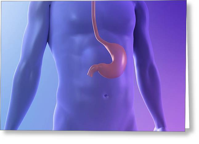 Gi Greeting Cards - Healthy Stomach, Artwork Greeting Card by Sciepro