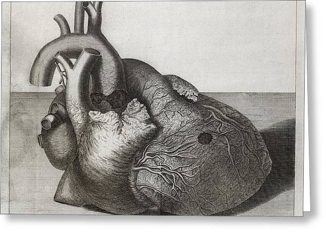 Royal Society Greeting Cards - Heart Of King George Ii, 18th Century Greeting Card by Middle Temple Library