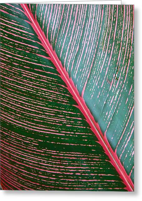 Indica Greeting Cards - Heliconia Leaf Greeting Card by Peter French - Printscapes