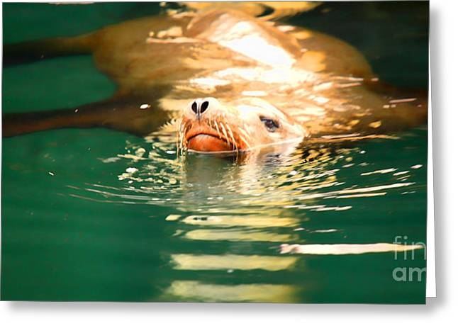 California Sea Lions Greeting Cards - Hello Greeting Card by Cheryl Young