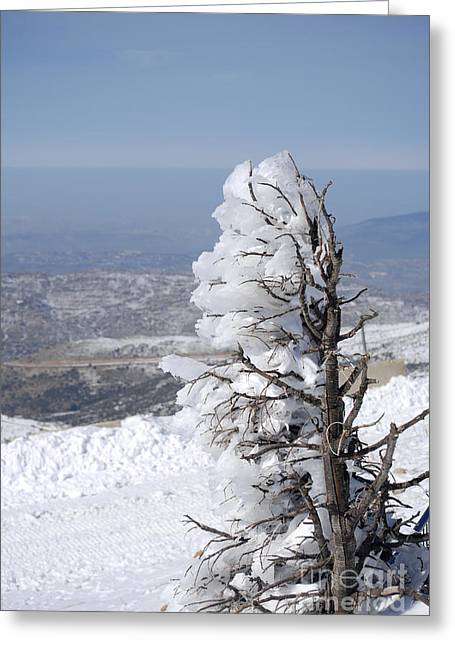 Amirp Greeting Cards - Hermon Mountain tree covered with snow  Greeting Card by Amir Paz