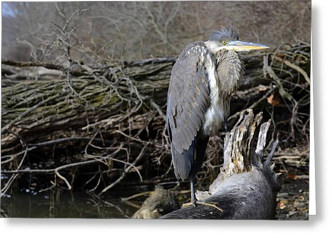 Bird Rookery Swamp Greeting Cards - Heron Greeting Card by Brian Stevens