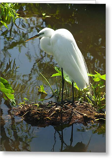 Nature Nesting Greeting Cards - Hiding Place Greeting Card by Carolyn Marshall