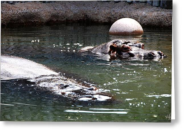 Sahara Sunlight Greeting Cards - Hippos Greeting Card by Thea Wolff