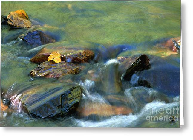Babbling Brooks Greeting Cards - Hitching A Ride Greeting Card by Sandra Bronstein