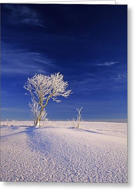 Hoar Frost On Trees, Bungay, Prince Greeting Card by John Sylvester