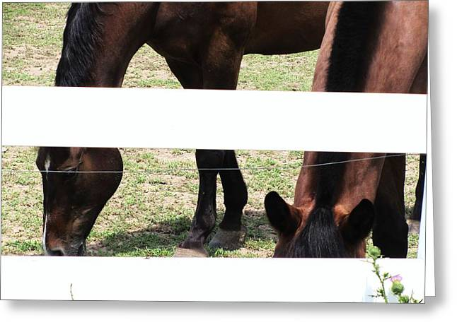 Horse-3 Greeting Card by Todd Sherlock