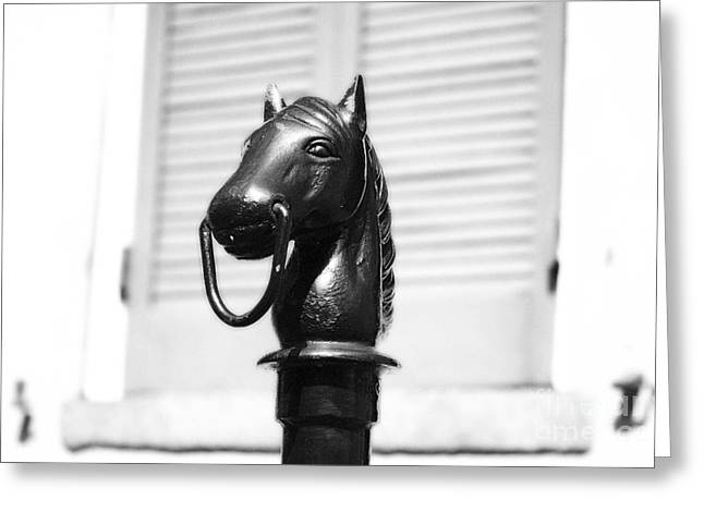 City Art Greeting Cards - Horse Head Hitching Post Macro French Quarter New Orleans Black and White Diffuse Glow Digital Art Greeting Card by Shawn O