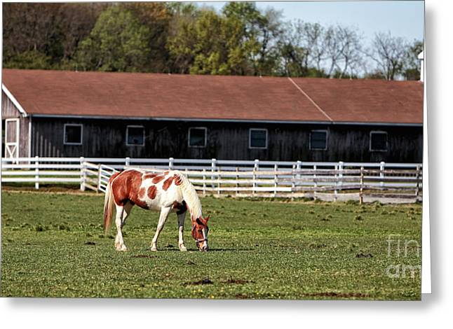 Horse Images Greeting Cards - Horse Greeting Card by John Rizzuto