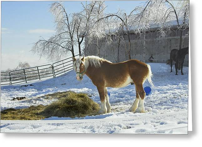 Confined Greeting Cards - Horse On Maine Farm After Snow And Ice Storm Greeting Card by Keith Webber Jr