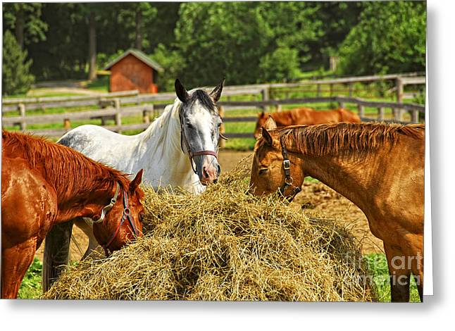 Pen Greeting Cards - Horses at the ranch Greeting Card by Elena Elisseeva