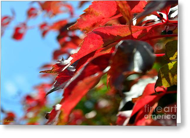 Color Photo Greeting Cards - Hot Autumn Leaves Greeting Card by Arik Baltinester