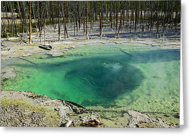 Geothermal Greeting Cards - Hot springs Yellowstone National Park Greeting Card by Garry Gay