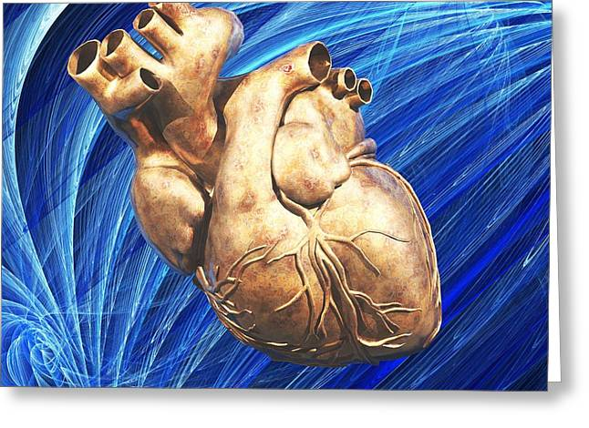 Biomedical Illustrations Greeting Cards - Human Heart, Artwork Greeting Card by Laguna Design