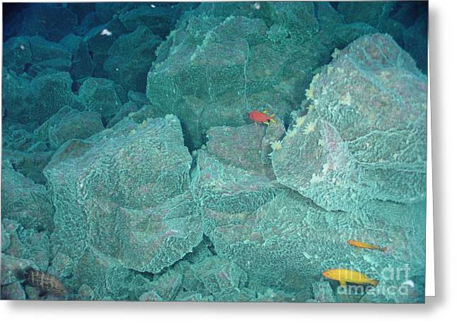 Mariana Greeting Cards - Hydrothermal Vent Community Greeting Card by Science Source