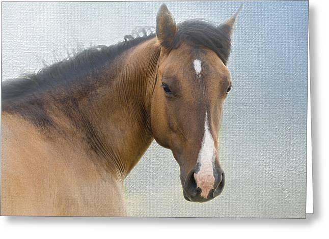 Quarter Horses Greeting Cards - I Walk in Beauty Greeting Card by Betty LaRue