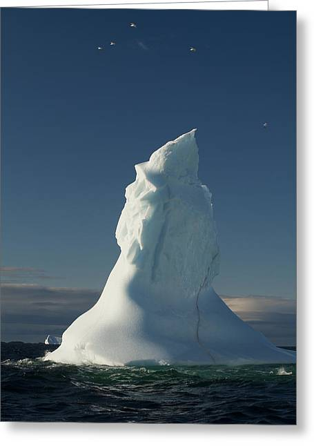 Concern Greeting Cards - Icebergs Off Coast Of Fogo Island Greeting Card by John Sylvester