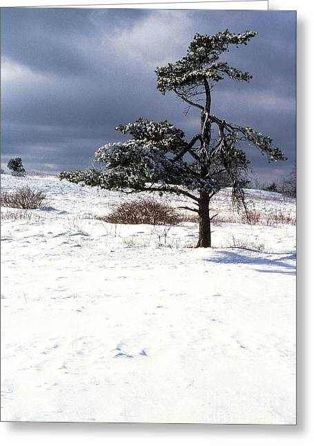 Iced Tree Shenandoah National Park Greeting Card by Thomas R Fletcher