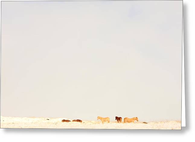 Without Lights Greeting Cards - Icelandic Horses In Snow Covered Field Greeting Card by Robert Postma