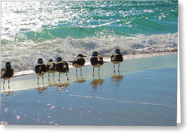 Seabirds Greeting Cards - Roll Call Greeting Card by Gail Barsh
