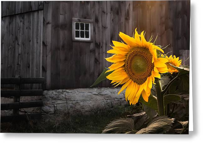 Barn Wood Greeting Cards - In the Light Greeting Card by Bill  Wakeley