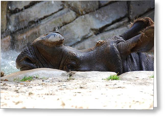 One Horned Rhino Greeting Cards - Indian Rhinoceros Greeting Card by Thea Wolff