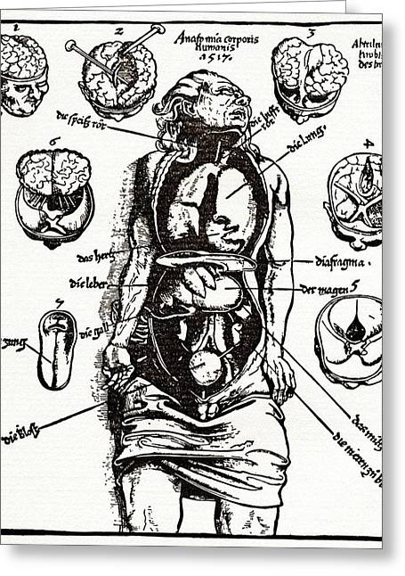 1518 Greeting Cards - Internal Anatomy, 16th Century Diagram Greeting Card by Sheila Terry