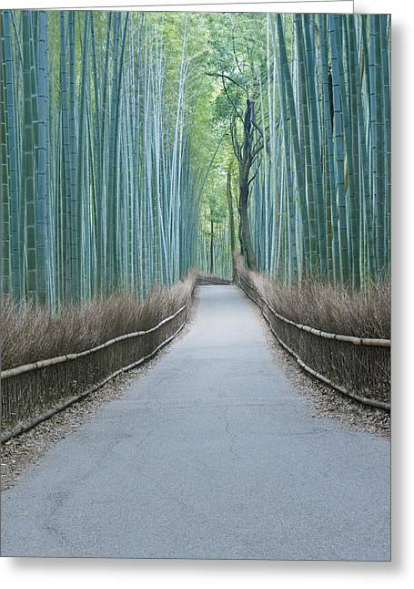 Recently Sold -  - Bamboo Fence Greeting Cards - Japan Kyoto Arashiyama Sagano Bamboo Greeting Card by Rob Tilley