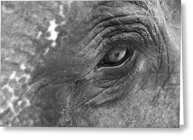 Gray Hair Greeting Cards - Java Elephants Eye - Bali Greeting Card by Gordon Wood