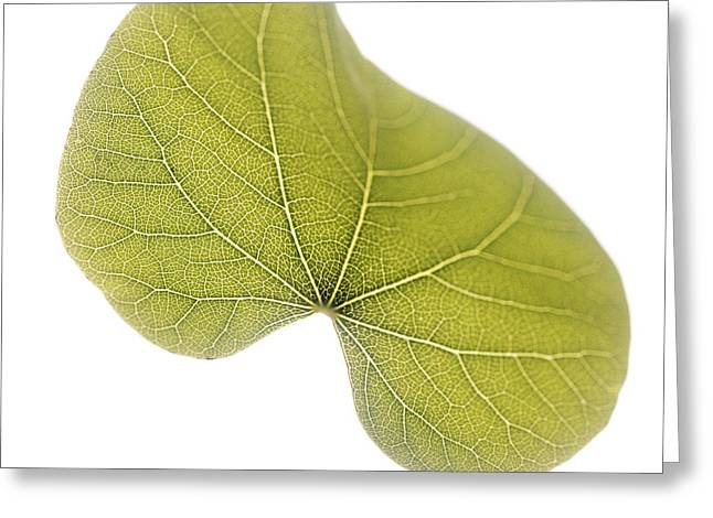 Cercis Greeting Cards - Judas Tree Leaf (cercis Siliquastrum) Greeting Card by Cristina Pedrazzini