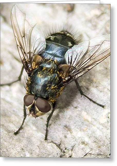 Legs Pyrography Greeting Cards - Just a fly Greeting Card by Shane York