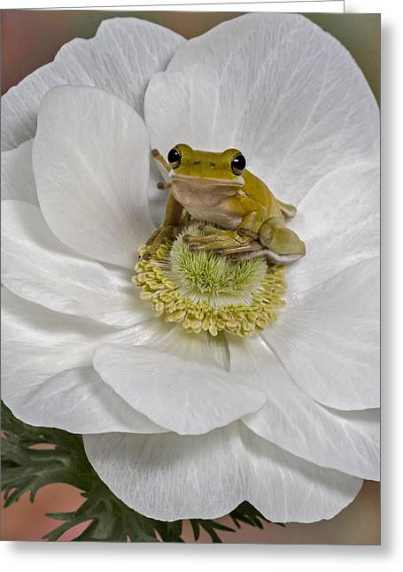 Best Sellers -  - Botanical Greeting Cards - Kermit Greeting Card by Susan Candelario
