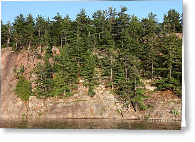 Pinus Resinosa Greeting Cards - Killarney Provincial Park Greeting Card by Ted Kinsman