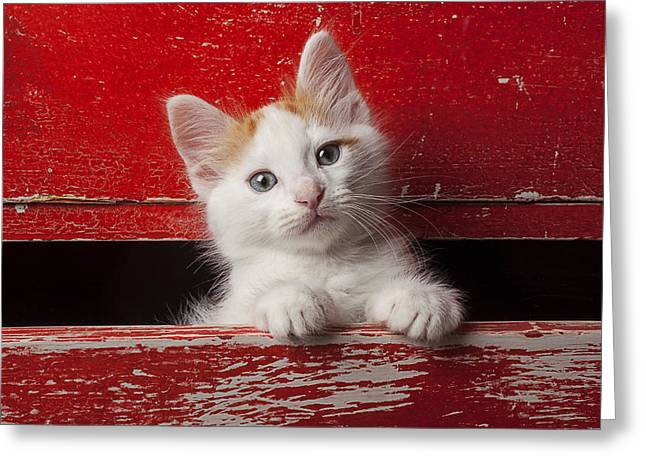 Pussy Greeting Cards - Kitten in red drawer Greeting Card by Garry Gay