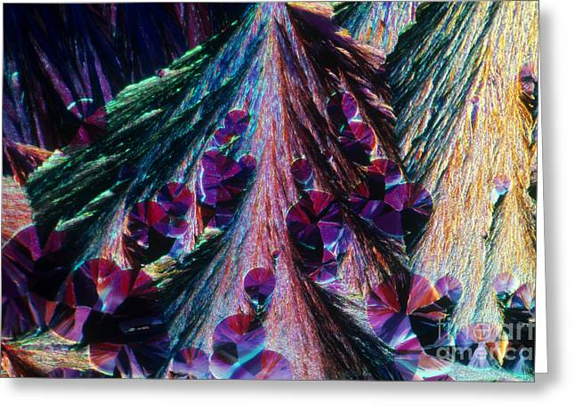 Light Micrography Greeting Cards - L. Histidine Crystals Greeting Card by M. I. Walker