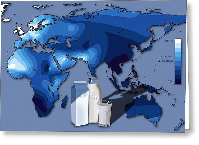 Lactose Tolerance, Eurasia And Africa Greeting Card by Art For Science