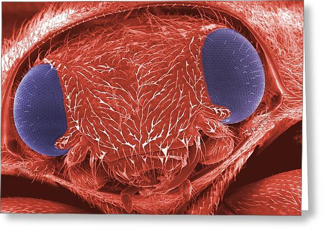 Coloured Greeting Cards - Ladybird Head, Sem Greeting Card by Peter Bond, Em Centre, University Of Plymouth