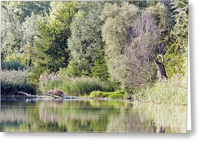 Czintos Greeting Cards - Lake reflections Greeting Card by Odon Czintos