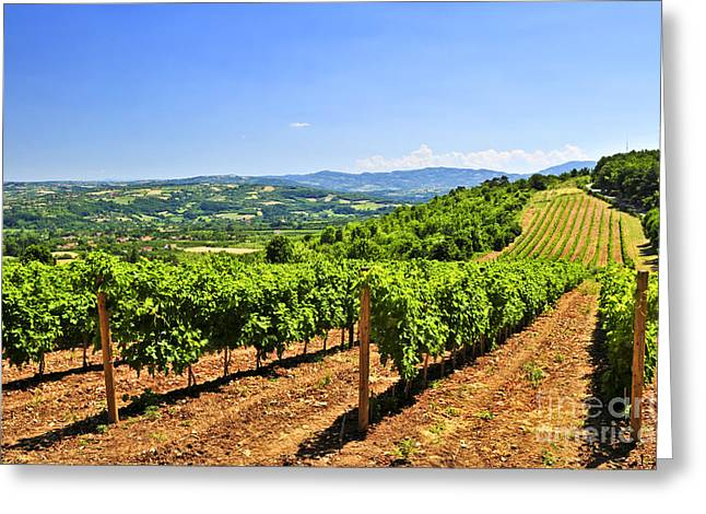 Vineyard Photographs Greeting Cards - Landscape with vineyard Greeting Card by Elena Elisseeva