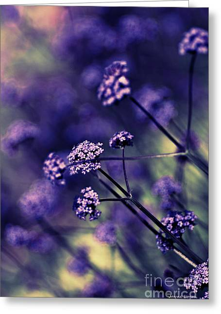 Card For Photographer Greeting Cards - Lavender Garden I Greeting Card by Jayne Logan Intveld