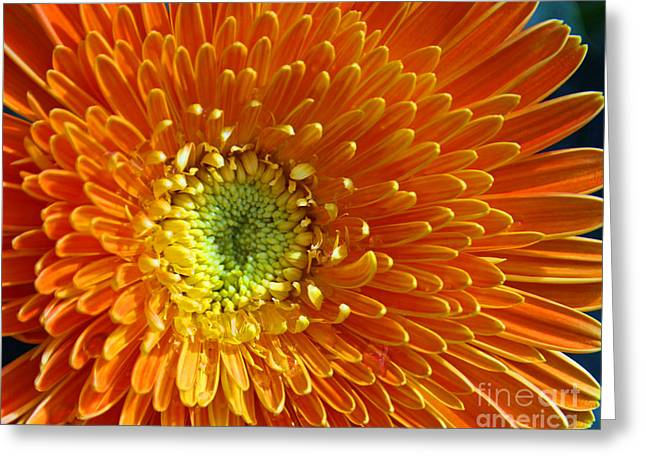 Flower Photo Greeting Cards - Layers Greeting Card by Dana Kern