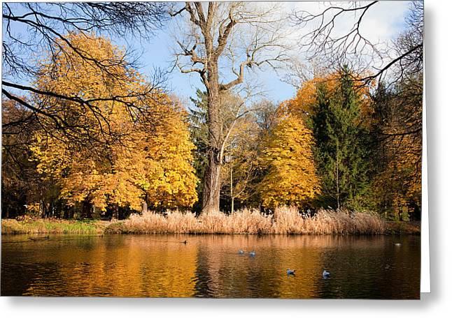 Leafage Greeting Cards - Lazienki Park Autumn Scenery Greeting Card by Artur Bogacki