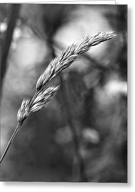 Envy Greeting Cards - Lazy Afternoon monochrome Greeting Card by Steve Harrington