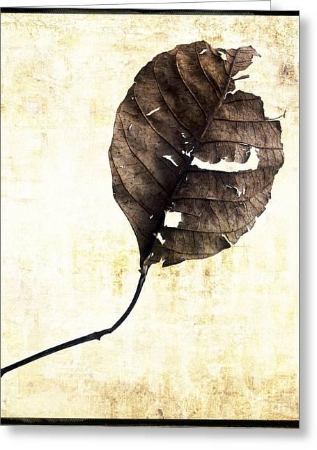 White Background Digital Art Greeting Cards - Leaf Greeting Card by Bernard Jaubert